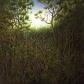 """Untitled - Woods II, oil on wood, 10"""" x 10"""""""