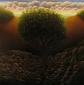 """Untitled (tree in rocks), oil on wood, 12"""" x 12"""""""
